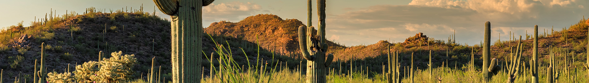 Cactus on hillside landscape